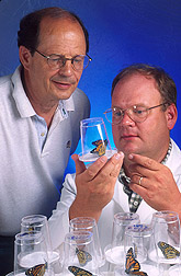 Entomologist and technician observe a group of butterflies: Click here for full photo caption.
