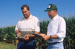 Photo: Entomologist Rich Hellmich (right) and technician Randy Ritland collect milkweed leaves near pollinating corn. Link to photo information