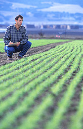 Photo: Brennan records data on weed seedling growth between rows of a young cover crop at USDA's 17-acre certified organic research plot in Salinas, California. Link to photo information