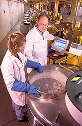 Animal geneticist Harvey Blackburn and technician Ginny Schmit place germplasm samples into a liquid nitrogen tank for long-term storage. Link to photo information