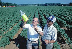 Entomologist and cotton farmer examine a boll weevil pheromone trap: Click here for full photo caption.