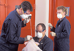 Two veterinary medical officers use a laryngoscope to inoculate an anesthetized pig, while a technician observes: Click here for full photo caption.