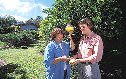 Photo: Ecologist Hannah Revis (right) shows Lucy Pasco how to use fruit fly monitoring traps in her garden. Link to photo information