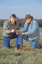 Photo: Research leader and farmer examine decomposing straw after grass seed harvest. Link to photo information
