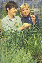 Technician and Oregon State University cooperator sample a native grass for analysis: Click here for full photo caption.