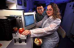Food technologist and chemist evaluate an apple before processing and irradiation treatments: Click here for full photo caption.