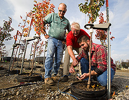 Willoway Nurseries production manager, extension horticulturist, and technician work with nursery-grown trees: Click here for full photo caption.