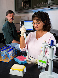 Entomologist reviews results from an ELISA analysis as technician prepares additional water samples: Click here for full photo caption.