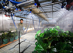 In a greenhouse, postdoctorate researcher evaluates new spray nozzles: Click here for full photo caption.