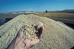 Photo: A hand holding raw oats. Link to photo information