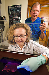 Molecular biologist and microbiologist examine an agarose gel for the presence of parasite DNA recovered from Eimeria oocysts in poultry litter: Click here for full photo caption.