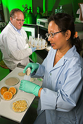 Chemists prepare orange peels for flash extraction of pectin using microwave heating under pressure: Click here for full photo caption.
