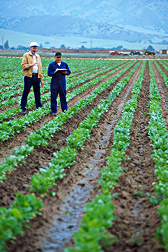 Geneticist and technician evaluate sugar beet breeding lines for disease resistance: Click here for full photo caption.