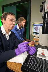 Chemist measures blood-clotting properties on modified cotton fabrics while another chemist studies the resulting image analysis on a nearby computer screen: Click here for full photo caption.