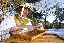 Entomologist uses a grid to measure adult honey bee population as a means to assess the overall health of the bee colonies: Click here for full photo caption.