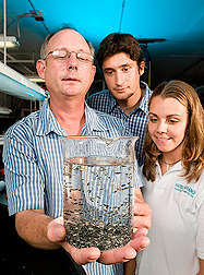 Fish biologist (left), HBOI biological scientist (center), and HBOI technician study a sample of hundreds of pompano larvae: Click here for full photo caption.