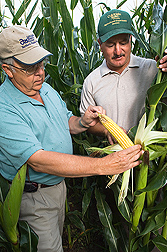 ARS soil scientist (left) and CSU Arkansas Valley Research Center manager examine corn in a high-nitrogen plot at the CSU Arkansas Valley Research Center, Rocky Ford, Colorado.