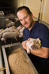 Research leader evaluates piglets' ability to use nutrients in corn coproducts for growth and development: Click here for full photo caption.