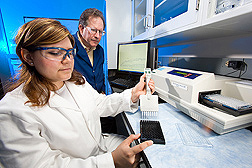 Chemist and biologist prepare a 96-well microplate for use in high-throughput assays of barleys being evaluated for their malting potential: Click here for full photo caption.