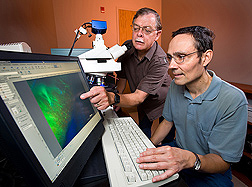 Molecular biologist (left) and technician use a fluorescence microscope to view a thin cross-section of a barley seed: Click here for full photo caption.