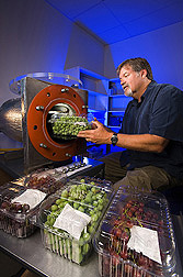 Plant pathologist places a clamshell box full of table grapes inside an ozone gas chamber: Click here for full photo caption.