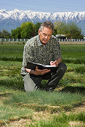 In drought-tolerance test plots in Logan, Utah, research leader notes the color, vigor, and persistence of exotic fine-leafed fescue plants collected from Kyrgyzstan: Click here for full photo caption.