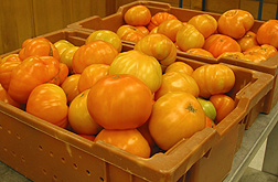 Photo: Tangerine tomatoes in bins.