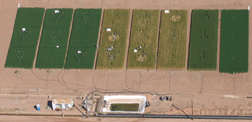 Aerial view of the Hot Serial Cereal experiment shows the effects of turning up the heat on wheat: Click here for full photo caption.