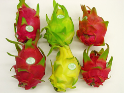Whole dragon fruit, Hylocereus sp., a delicious tropical fruit gaining popularity in the continental United States: Click here for photo caption.