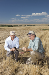 Research leader (left) and collaborator check the ease of entering farm operation information on a smart phone instead of on a tablet computer: Click here for full photo caption.