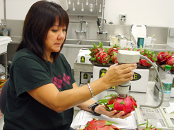 Biological science technician analyzes peel color of irradiated dragon fruit as part of the quality analysis of irradiated tropical crops: Click here for full photo caption.