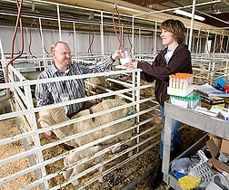 Animal scientist Bret Taylor (left) and technician Tonya Thelen collect milk samples from a ewe to measure milk production and selenium content: Click here for photo caption.