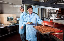 In Albany, California, research engineer Zhongli Pan (right) and food technologist Don Olson conduct almond pasteurization tests using infrared heating and a hot-air roaster: Click here for photo caption.