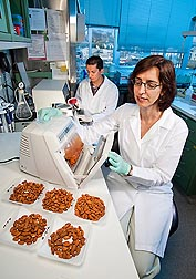 Microbiologist Maria Brandl places treated almonds into a washing device, and research associate Gokhan Bingol inspects the wash water for any surviving bacteria: Click here for full photo caption.