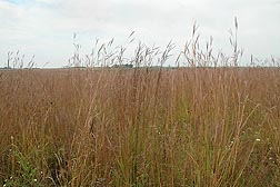 ARS researchers are studying how nitrates and phosphorus affect water quality in a crop field that has been converted to native prairie vegetation at the Neal Smith National Wildlife Refuge near Prairie City, Iowa: Click here for photo caption.