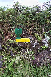 Japanese beetle trap modified to coat beetles with Metarhizium spores in the Azores: Click here for photo caption.