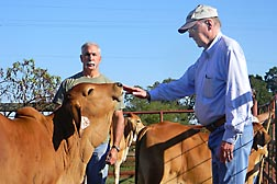 ARS animal scientist Jeff Carroll (left) and animal physiologist Ron Randel from Texas AgriLife Research and Extension Center measure cattle temperament by scoring their reactions to human observers: Click here for full photo caption.
