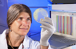 ARS plant pathologist Carolee Bull examines the bacterium that causes bacterial blight of cruciferous crops such as arugula, broccoli, Brussels sprouts, and cauliflower: Click here for photo caption.