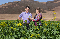 ARS Plant pathologist Carolee Bull and University of California Cooperative Extension farm advisor Steve Koike scout for bacterial blight in a field of broccoli raab: Click here for photo caption.