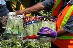 Meeting all USDA organic certification standards, lettuce harvested from the Salinas test site is packaged in the field and delivered table ready to the store: Click here for photo caption.
