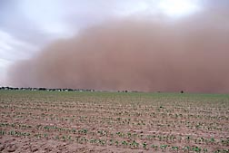 A dust storm near Lubbock, Texas, in June 2010: Click here for full photo caption.