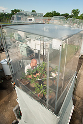 A scientist studies potato plants in a soil-plant-atmosphere research chamber. Link to photo information