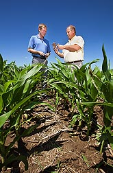 Soil scientists Brian Wienhold (left) and Gary Varvel compare corncob residue in various stages of decomposition in a no-till field in Lincoln, Nebraska: Click here for full photo caption.