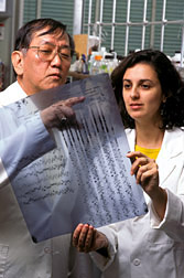 A DNA sequencing gel being read by microbiologist Shimanuki and geneticist Arias. Click here for full photo caption.