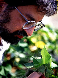 Entomologist inspects plant leaves