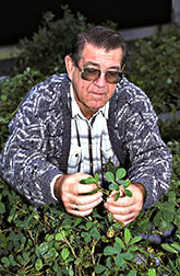 Chemist Harold Pattee with hairy peanut plants