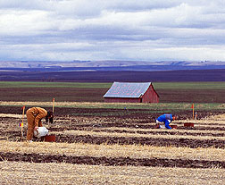 Scientists evaluate soil water infiltration in an experiment. Click here for full photo caption.
