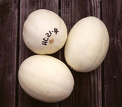Calcium dips give vine-ripened melons added storability.
