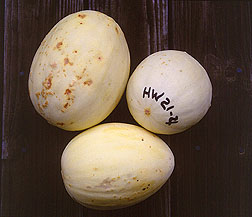 Honeydew with discoloration indicating spoilage. Click here for full photo caption.