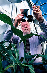 Soil scientist James Schepers tests a remote sensing technique that checks for nitrogen stress in corn plants,  so high-canopy sprayers 'know' how much liquid fertilizer to feed the crop. Link to photo information